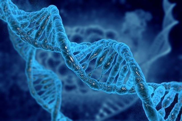 Intelligence genes discovered for the first time