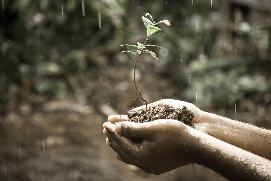 El olor que deja la lluvia se conoce como petricor.
