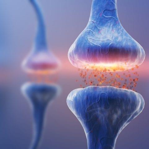 Fonctions des neurones : quelles fonctions remplissent-ils et comment fonctionnent-ils ?