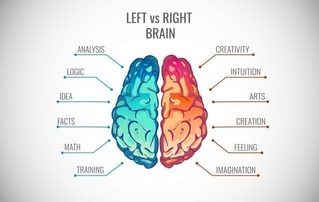 Left brain and right brain, the two brain hemispheres