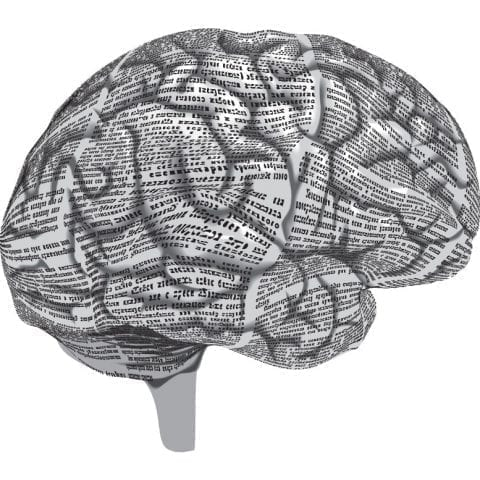 Gray Matter: How we process information