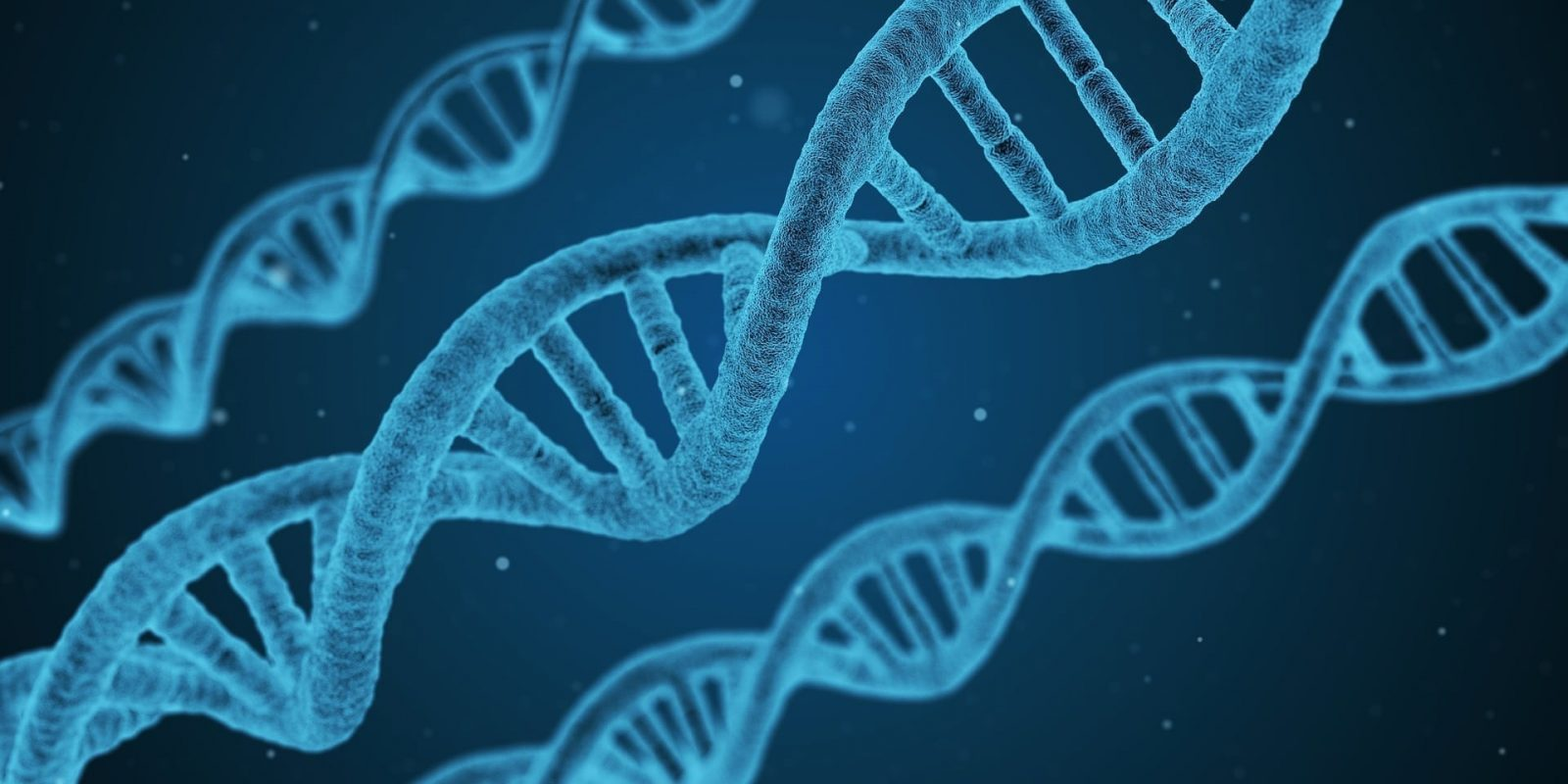 DNA dysfunction can trigger cells to enter senescence.