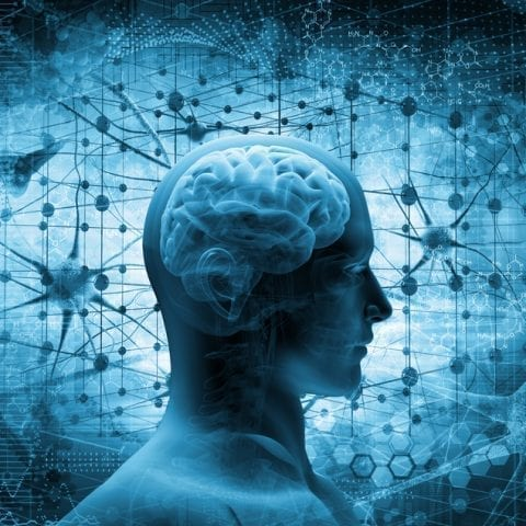 A unique brain area linked to higher cognitive capacities