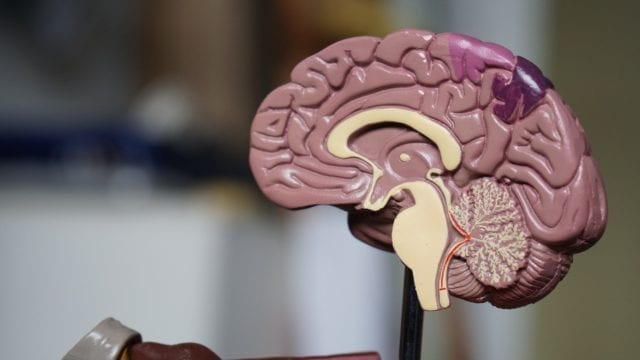 A Picture of (Brain) Health: Powerful Brain Scans and Assessment Batteries We Use to Understand Our Most Complex Organ